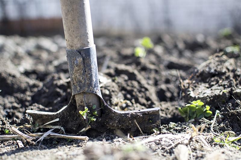 Hoe creeer je een kindvriendelijke tuin?