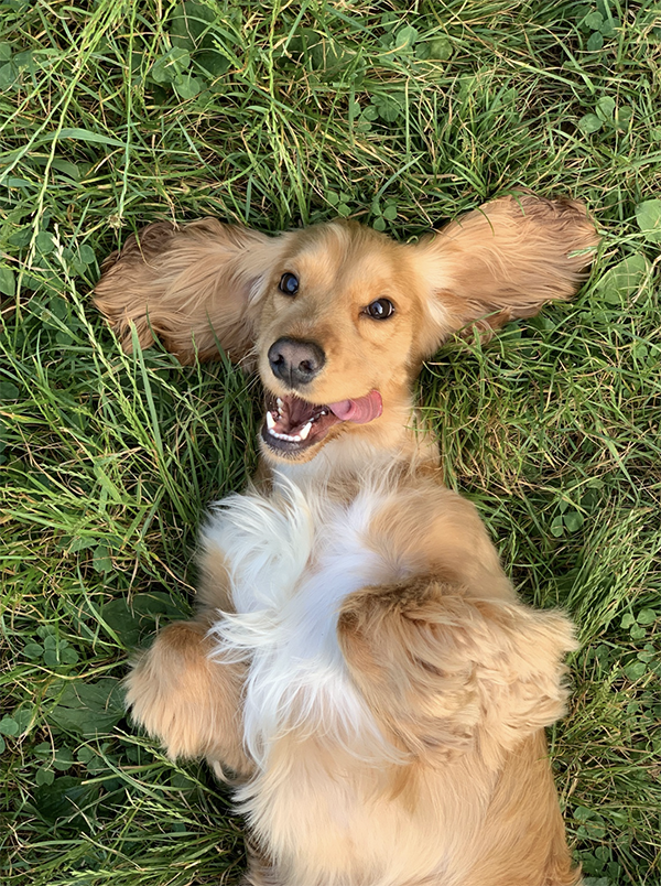 Eerste hulp bij jouw zieke hond